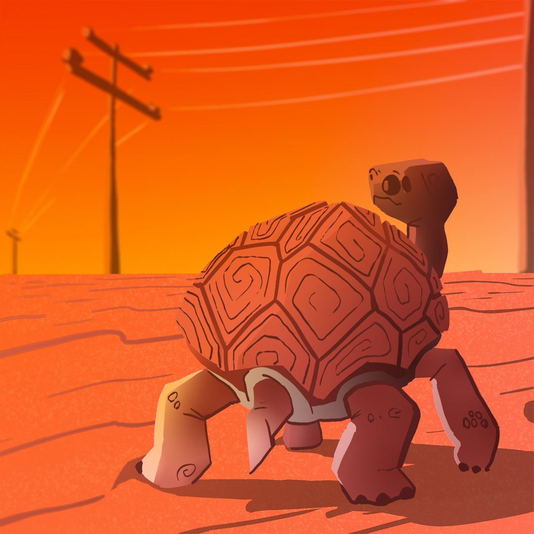 Turtle in the desert